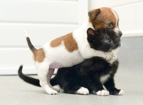 Cats dogs Interspecies Love kitten stories friends best friends goggies r owr friends - 6678184704