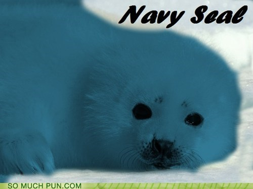 navy seal,navy,seal,double meaning,literalism,color