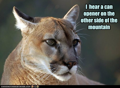 cat hearing far away big lion mountain can opener - 6678706688