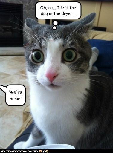 dryer Cats captions home shenanigans mean evil - 6678846976