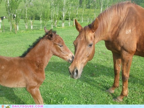 squee,reader squee,horse,foal,pet,mommy,baby,bonding