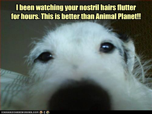 I been watching your nostril hairs flutter for hours. This is better than Animal Planet!!