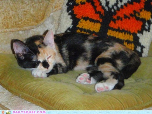 reader squee,kitten,toe beans,Cats,squee,sleeping