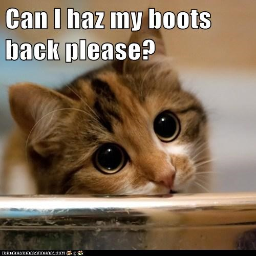 Puss in Boots boots shrek Cats captions puppy dog eyes eyes beg - 6679519488