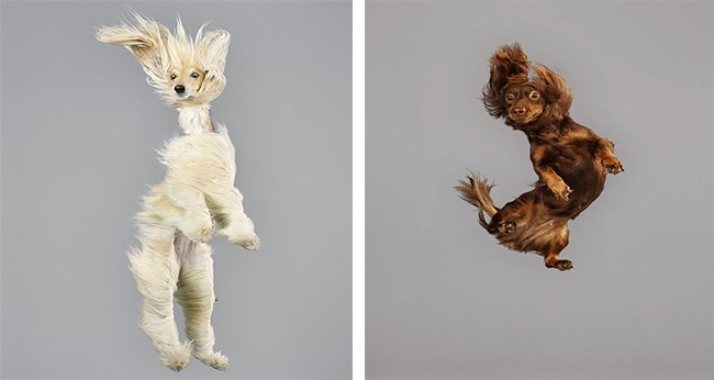 pics of dogs caught mid air