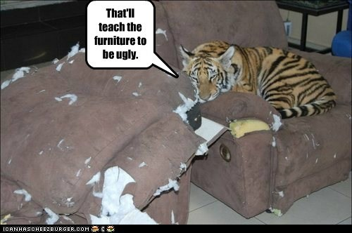 furniture,teach,cub,clawing,tiger,torn,ugly