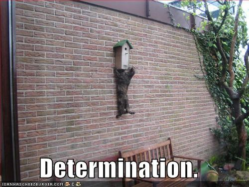 birdhouse bricks climbing determination lolcats - 668013824