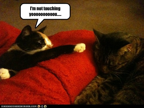 im-not-touching-you Cats captions kids children game touch annoying - 6680319488