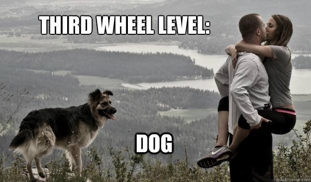 Animals Third Wheeling