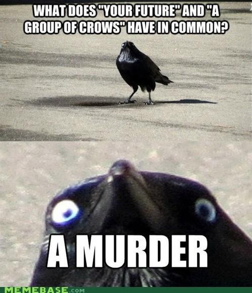 crow murder future - 6681222656