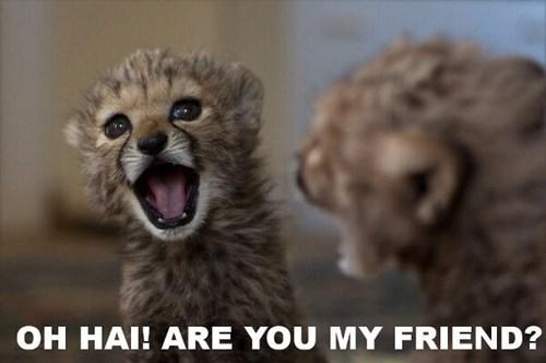 cheetahs big cats cubs mirrors reflections captions smiling friends self - 6681309184