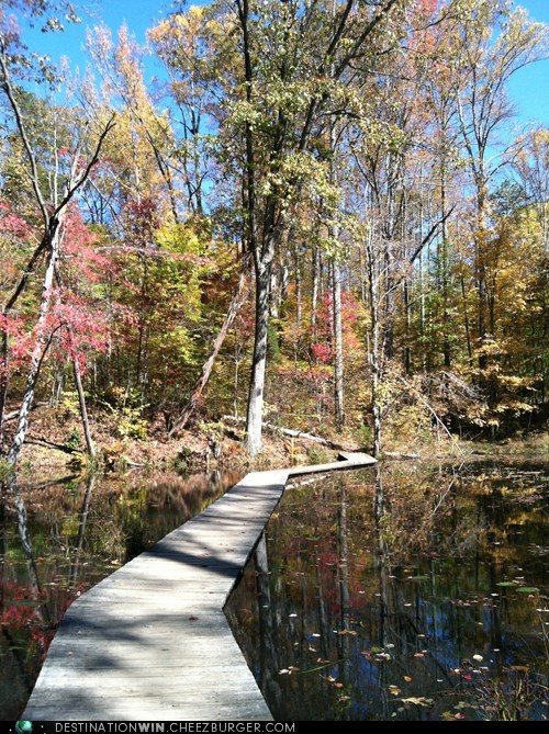 woods,path,lake,fall