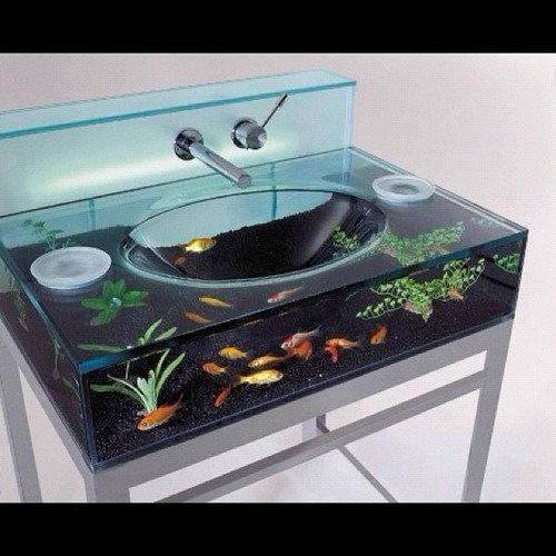 sink,aquarium,fish