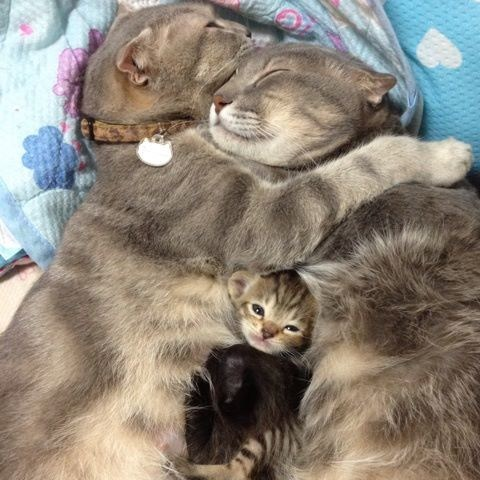 Cyoot Kittehs of teh Day: Spot the Newest Addition to the Family