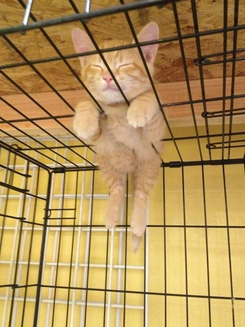 Cats,kitten,cyoot kitteh of teh day,cages,uncomfortable,comfort is relative,sleeping,wtf,cats are weird
