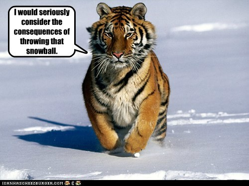 consequences snowball snow chasing tiger running threat dangerous