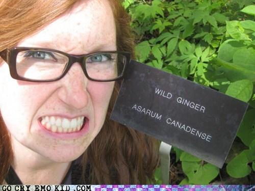 ginger wild - 6682350848