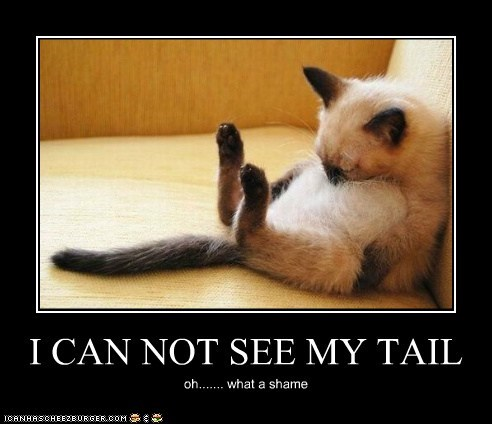 I CAN NOT SEE MY TAIL oh....... what a shame