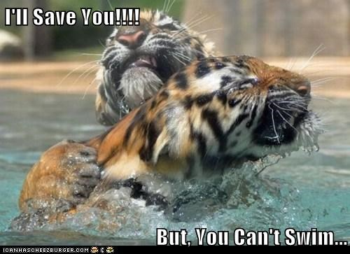 tigers water swimming save cant-swim mistake - 6682720512