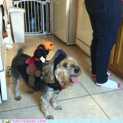costume reader squee headless horseman halloween pet dogs squee - 6683299328