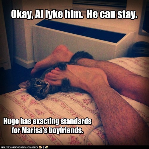 boyfriend approve relationships human Cats captions - 6683429376