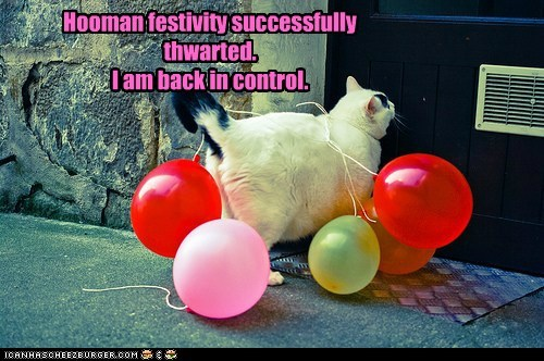 Party balloon festivity human Cats captions plan control - 6683507200