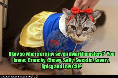 snow white,dwarves,dwarf,hamster,eat,nom,food,Cats,captions