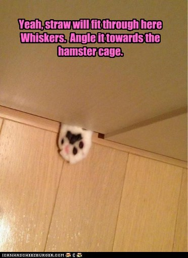hamster cage straw sneaky Cats nom food captions - 6683549440