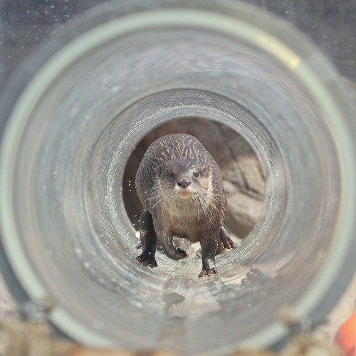 pipeline,brace yourselves,otters,otter,tube,squee