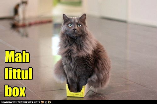 box small little if it fits Cats captions - 6683969792