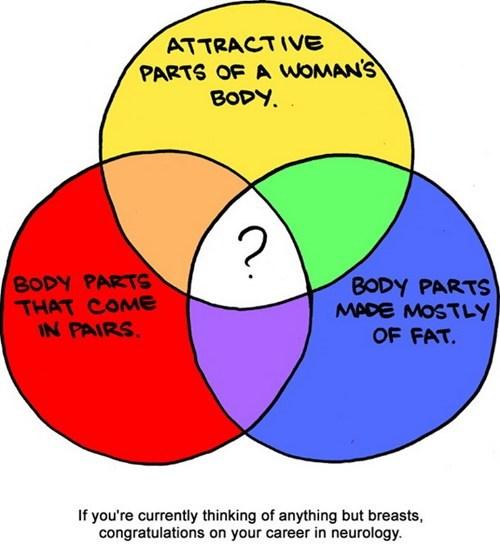 Saturday Morning Breakfast Cereal neurology breasts - 6684162304