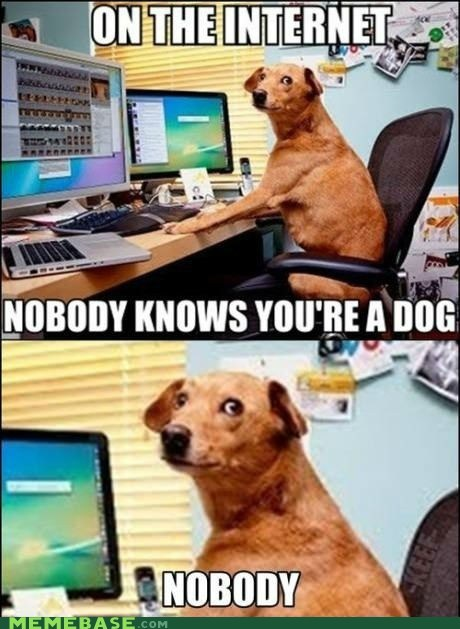 dogs zoom nobody internet - 6684358656