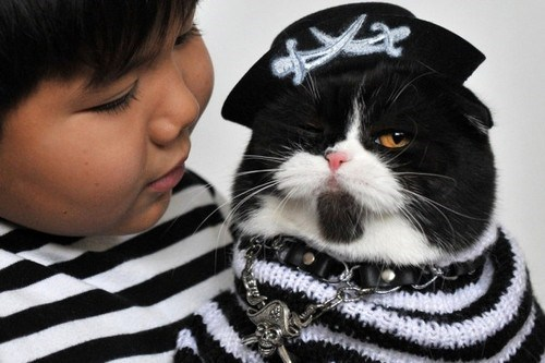 cat costumes pirates halloween costumes - 6684587264