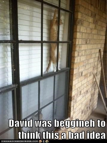 David was beggineh to think this a bad idea