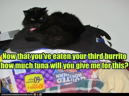 burrito tummy stomach sick ill runs Cats captions toilet toilet paper - 6684818176