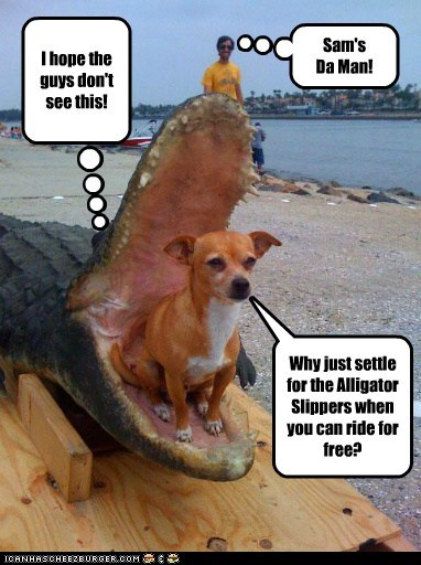 I hope the guys don't see this! Why just settle for the Alligator Slippers when you can ride for free? Sam's Da Man!
