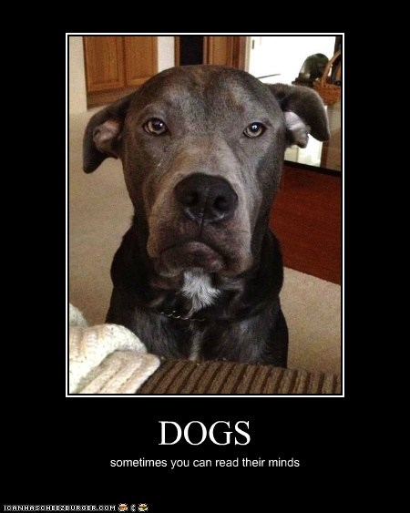 DOGS sometimes you can read their minds