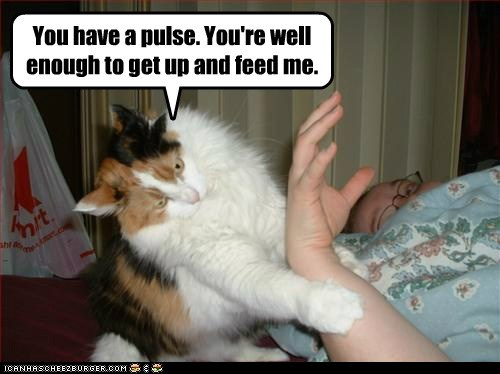 pulse,health,medical,feed,demand,dead,Cats,captions
