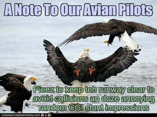 runway impressions eagles birds collisions pilots stunt avian