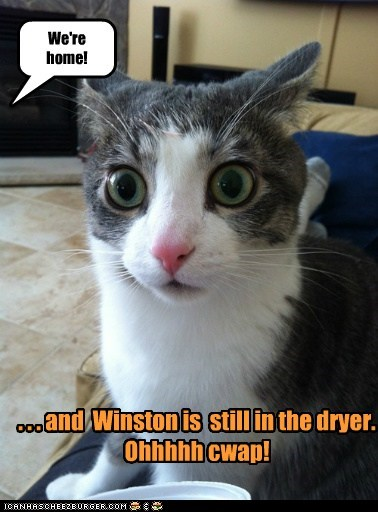 We're home! . . . and Winston is still in the dryer. Ohhhhh cwap!