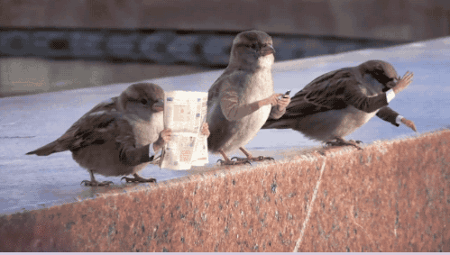 animal GIFs Funny GIFs birds gifs no arms - 6686725