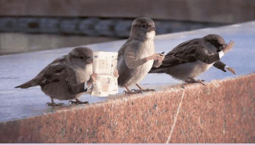 animal GIFs Funny GIFs birds gifs no arms jo38ma3 - 6686725