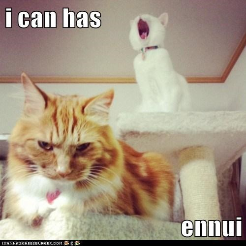 ennui boredom depressed Cats captions - 6686764544