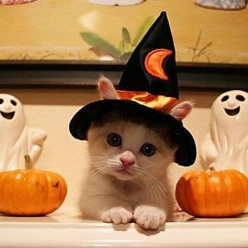 cat costumes which halloween costumes - 6686843136