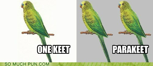 parakeet,pair,prefix,homophone,literalism,one,two