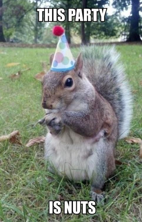 calm down this party nuts squirrel - 6686955776