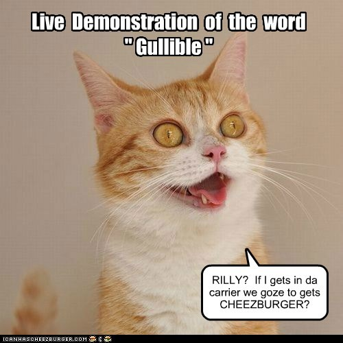 gullible,cheezburger,demonstration,stupid,Cats,captions
