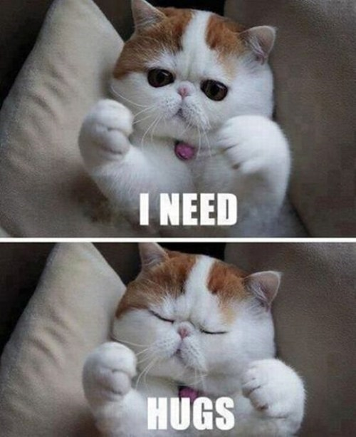 snoopy hugs Cats captions multipanel i need hugging want - 6687147520