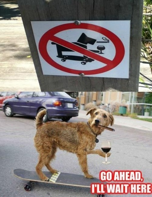 dogs,signs,smoking,no,wtf,captions,multipanel,skateboards,skateboarding