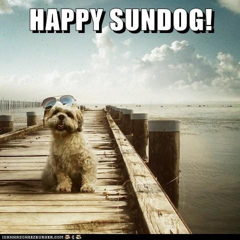dogs,what breed,happy sundog,Sundog,dock,ocean,sunglasses